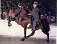 Dr. Luton on horse