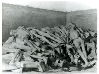Photograph of Stacked Corpses
